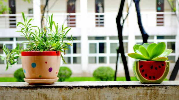 Two plants in cheerful pots sit on a window ledge