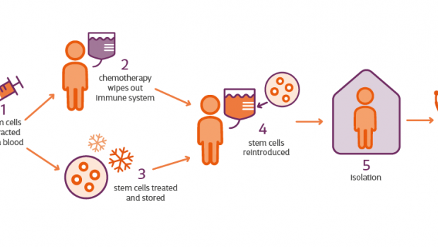 infographic shows HSCT stages, how stem cells are extracted and reintroduced after chemotheraphy is used to wipe out the immune system