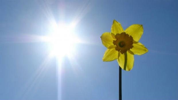 A photo showing a flower and the sun